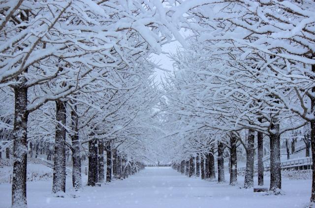 winter_191219